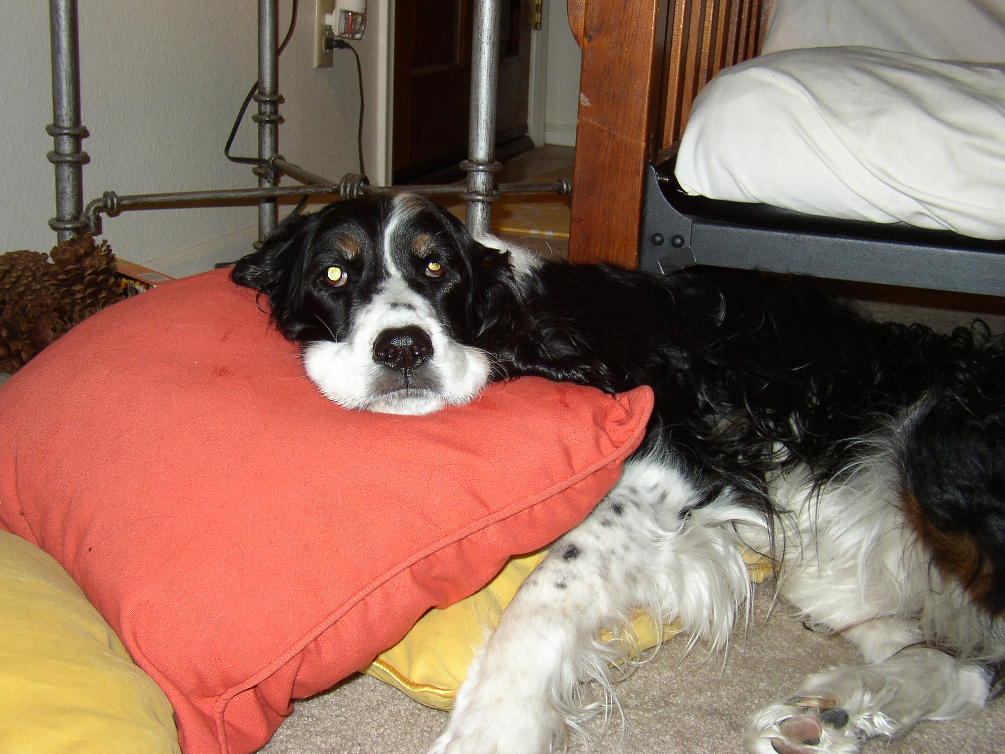 Dogs Blog Rose and Kate's Dog Blog | Of course Dogs Blog ...